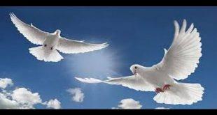 الحمامة البيضاء في المنام , تفسير الحمام الابيض فى الحلم يعنى السلام والامان
