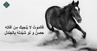 بيت شعر قوي عن عزة النفس , ما هى عزة النفس للانسان
