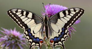 صور كم تعيش الفراشة , هتستغرف لما تعرف الفراشة بتعيش قد ايه