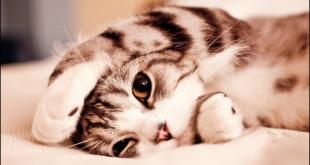قطة ميتة في المنام , معني رويه قطه ميته في حلمي