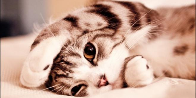 صور قطة ميتة في المنام , معني رويه قطه ميته في حلمي