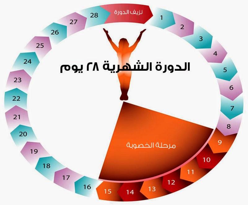 صورة كيفية حساب الدورة الشهرية , مدة الحيض من ٢٥ الى ٣٠ يوم