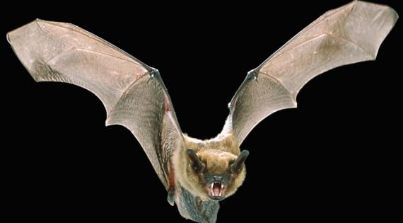 صورة دم الوطواط لازالة الشعر للاطفال , مصداقيه دم الوطواط لازاله الشعر