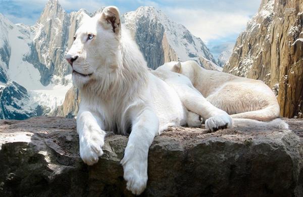 صورة اجمل حيوانات في العالم , الحيوانات نعمة في حياتنا