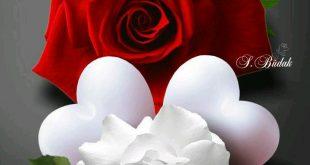 صورة صور ورود رومنسيه , عندما تعبر الورود عن الرومانسيه فهى تكون هكذا