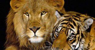 صورة منافع الحيوانات البرية , فائدة الحيوانات البرية رغم شراستها