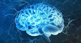 علاج تلف خلايا الدماغ بالاعشاب , الشيخوخة و علاقتها بتلف المخ