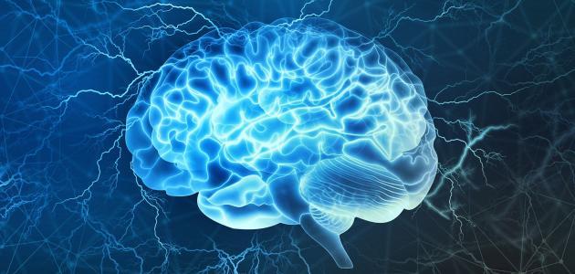 صورة علاج تلف خلايا الدماغ بالاعشاب , الشيخوخة و علاقتها بتلف المخ