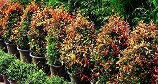 نباتات الزينة الداخلية واسمائها , فوائد نباتات الزينة في بيتك