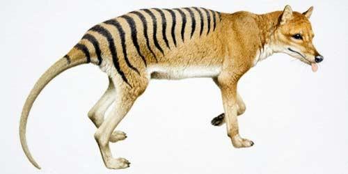 صورة صور لحيوانات منقرضة , اشهر الحيوانات المنقرضة