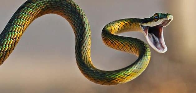 صورة تفسير الحلم بالثعابين , احذر من اهل بيتك