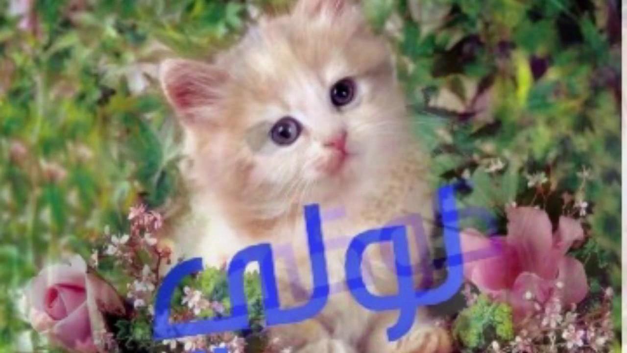 صورة اسماء قطط ذكور , اختاري اسم للقط بتاعك اجدد الاسماء