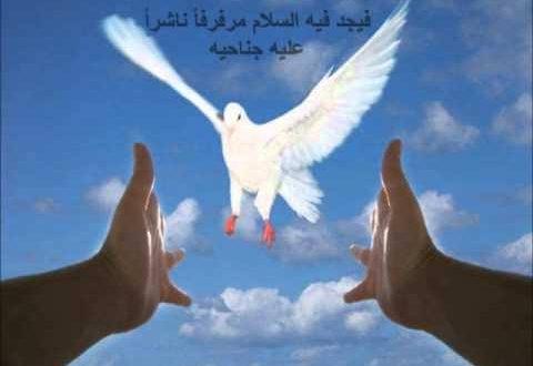 صورة صور عن السلام , الحمام رمز الامن والسلم والسلام
