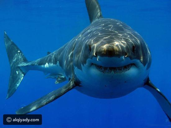 صورة صور حيوانات مفترسة, اشهر الحيوانات المفترسة بالصور