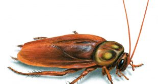 صورة اتصلت بيهم وجم قضو علي كل الحشرات الموجودة في البيت , افضل شركة مكافحة حشرات